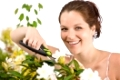 Gardening - woman cutting flower with pruning shears on white background