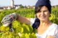 Woman working in the vineyard
