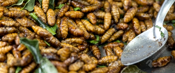 insects at the traditional food market at the Phimai festival in the Town of Phimai in the Provinz Nakhon Ratchasima in Isan in Thailand.  Thailand, Phimai, November, 2017