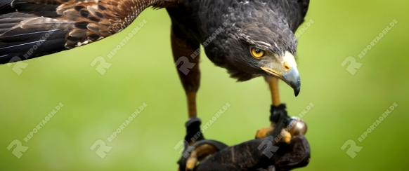 An image of a beautiful hawk bird