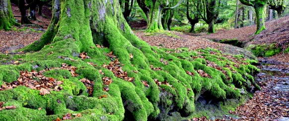 Beech forrest, Gorbea Natural Park, Basque Country, Spain
