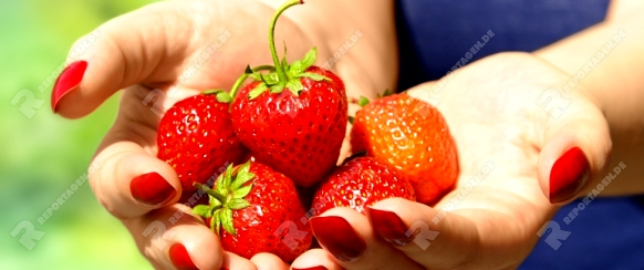 Woman holding ripe strawberry in hands. Outdoor photo