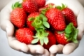 Many strawberries on hand, focus on strawberry.